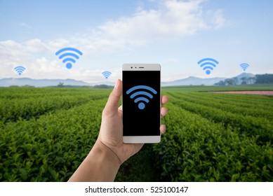 Agriculture, Internet ,and Mobile signal in agriculture concept. Internet and telephone signal network in farm, rice field, tea field, country side.