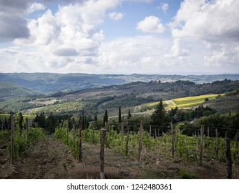 Agriculture landscape, olives and wine of Tuscany, seen from white roads in october chianti italy