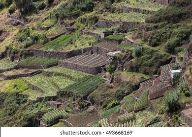 Agriculture and landscapes in Madeira Island. View to the terraced and cultivated land.