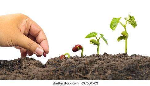 Landwirtschaft und Neuer Lebensanfang Konzept. Pflanzensaatgut mit Samenkeimfolge auf weißem Hintergrund