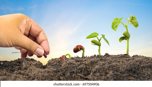 Agriculture and New life starting concept. Farmer hand seed planting with seed germination sequence over sunset background