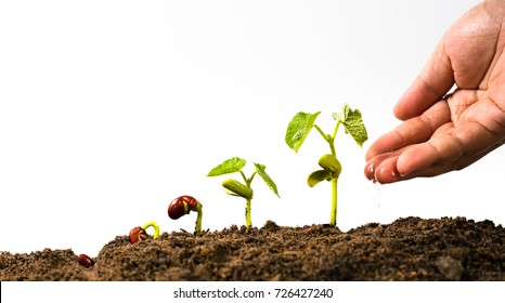 Agriculture and New life starting concept. Farmer hand seed watering with seed germination sequence over isolated on white background