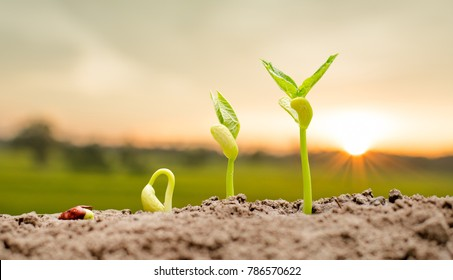 Agriculture and New life starting concept. Seed germination over soil and sunlight ray in morning time