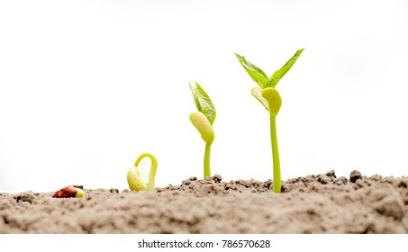 Agriculture and New life starting concept. Seed germination over soil isolate