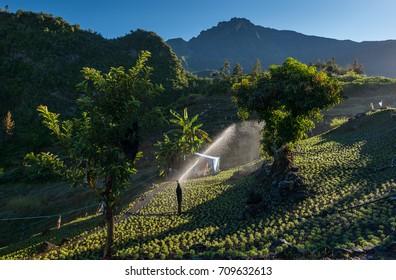Agriculture on La Reunion, France