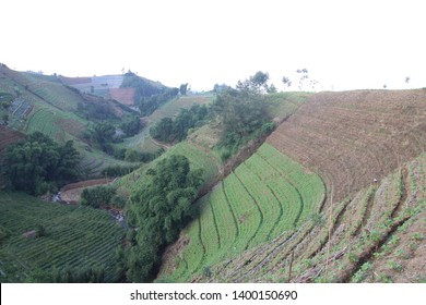 agriculture on sloping mountain slopes