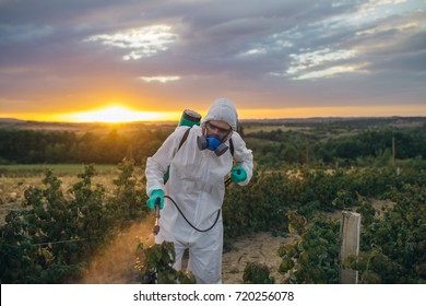 Agriculture pest control - Young worker spraying organic pesticides on fruit growing plantation during sunset.