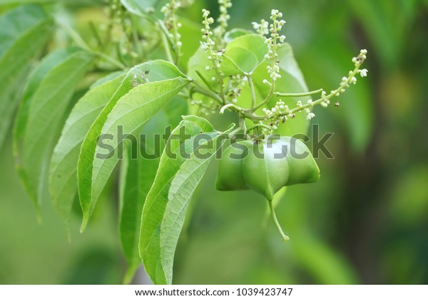 Agriculture plant herb healthcare .
