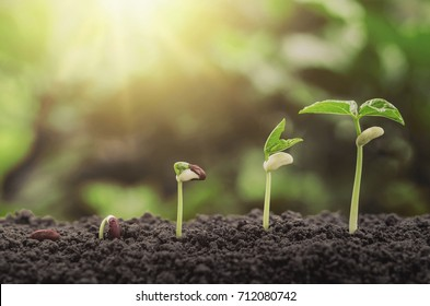 agriculture plant seeding growing step concept in garden and sunlight