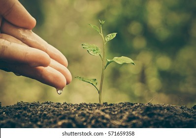 Agriculture. Plant seedling. Hand nurturing and watering young baby plant growing on fertile soil with natural green background