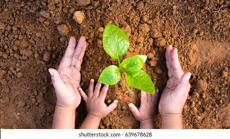 Agriculture and planting in spring gardening concept,Close up Kid hand and father planting young tree