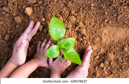 Agriculture and planting in spring gardening concept,Close up Kid hand and father planting young plant