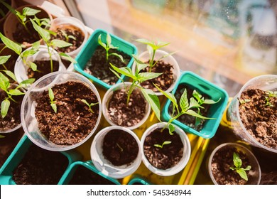 Agriculture, Seeding, Plant seed  growing concept  selective focus