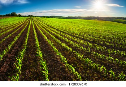 Agriculture shot: rows of young corn plants growing on a vast field with dark fertile soil leading to the horizon - Shutterstock ID 1728339670