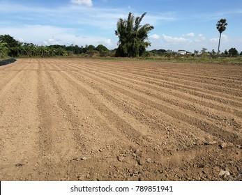 Agriculture Soil preparation before plantation