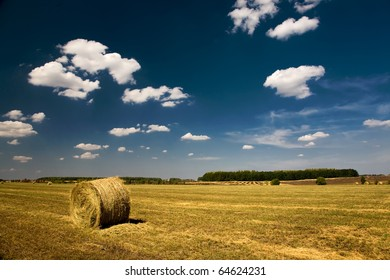 agriculture summer landscape, field wheat
