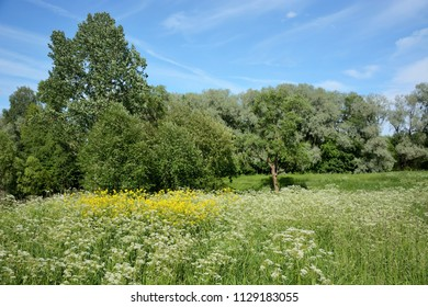 Agriculture summer scene- pasture with many flowers