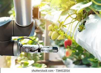 Agriculture technology , artificial intelligence concepts, Farmer use smart farm automation robot assistant image processing for detection weed ,spray chemical , replace worker and increase precision.