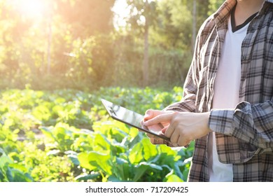 Agriculture technology concept. Agronomist using tablet computer on agriculture field and examining before harvesting.