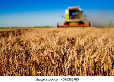 Agriculture tractor cultivating land. Combine harvester at wheat field. Combine machine working at large field