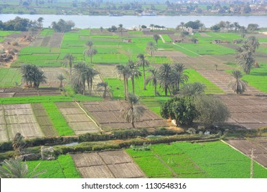 Agriculture in upper Egypt by the Nile river