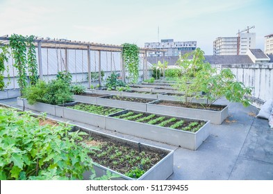 agriculture in urban on rooftop