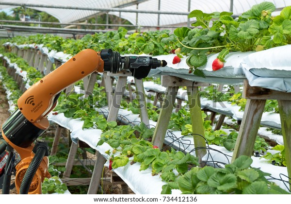 Agriculture vertical farming technology , artificial intelligence precision concepts, Farmer use smart farm automation robot assistant image processing for detection weed ,spray chemical.