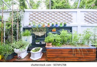 agriculture vertical in urban garden