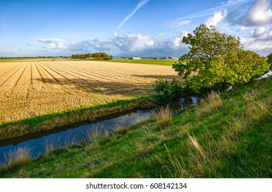 Agriculture wheat field at rural river shore landscape