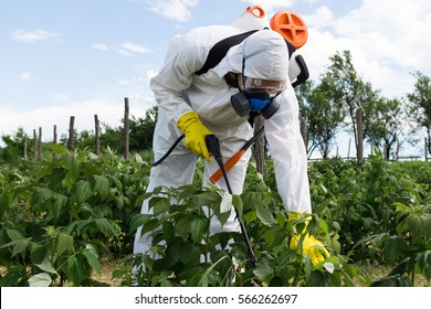 Agriculture worker - Young worker spraying organic pesticides on fruit growing plantation.