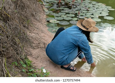 Agriculturist women wear rubber sleeves, wash their hands in a pond with lotus trees.