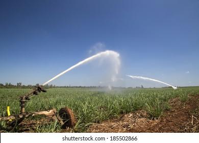 Agrigulture, irrigation, sugarcane