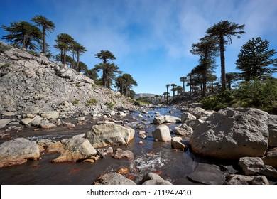 Agrio river, Patagonia, Neuqen, Argentina. Land of dinosaurs. Provincial Park of Copahue