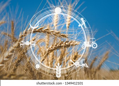 Agritech concept. Digital agricultural messages and icons on organic wheat field background