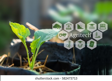 Agritech concept. Agritech messages and icons on organic vegetables farm.