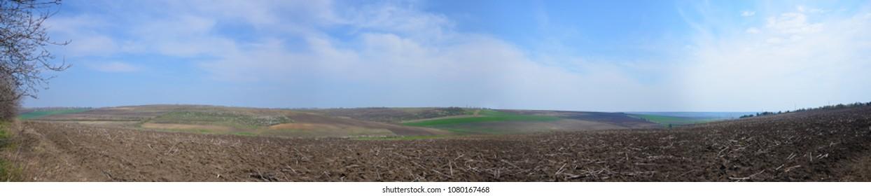 Agro field panorama