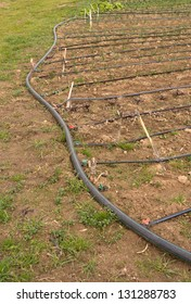 Agroecological plantation with drip irrigation