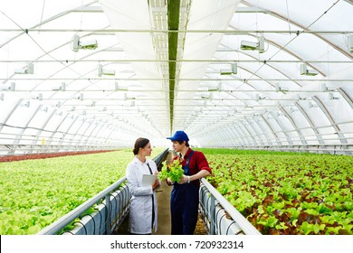 Agro-engineering staff having discussion of new sorts of plants in spacious greenhouse