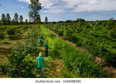agroforestry system, men working on grass pruning.