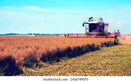 Agroindustrial industrial landscape with combine harvesters picking up hay on a rape field on a sunny day against a background of cloudy sky. (good prosperity, food safety, jobs - endpoint)
