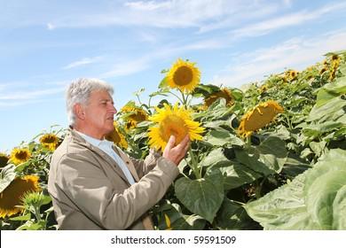Agronomist analyzing sunflowers