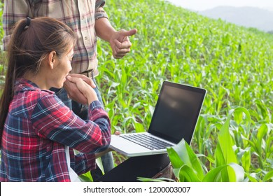 Agronomist examining plant in corn field, Couple farmer and researcher analyzing corn plant.