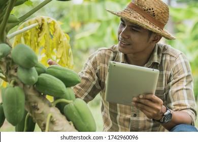 Agronomin mit Landwirten, die Erzeugnisse von der Qualität der Erzeugnisse im landwirtschaftlichen Betrieb abhängig machen