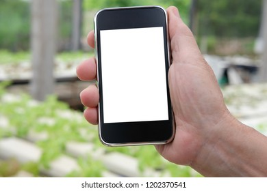 agronomist farmer using smart phone to monitor ec, pH, temperature of lettuce vegetable in hydroponic farm. sensor technology in smart agriculture