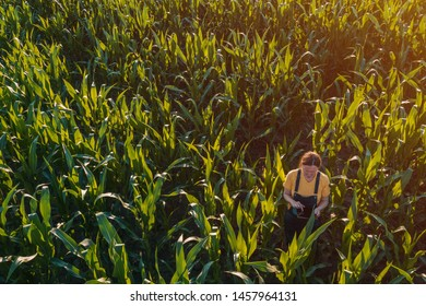 Agronomist farmer woman using tablet computer in corn field. Aerial view of female farm worker in maize plantation with modern technology app analyzing crop development, from drone pov