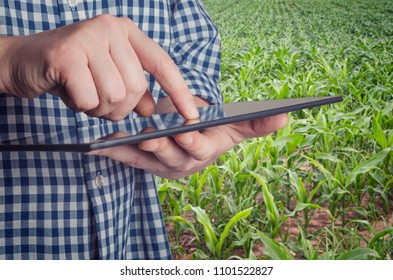 Agronomist holds tablet touch pad computer in the corn field and examining crops before harvesting. Agribusiness concept.