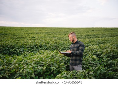 Agronomist inspecting soya bean crops growing in the farm field. Agriculture production concept. young agronomist examines soybean crop on field in summer. Farmer on soybean field