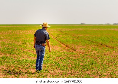 Agronomist inspects soybean crop in agricultural field - Agro concept - farmer in soybean plantation on farm.