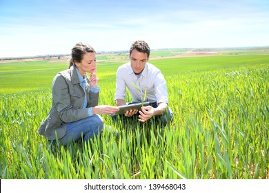 Agronomist looking at wheat quality with farmer