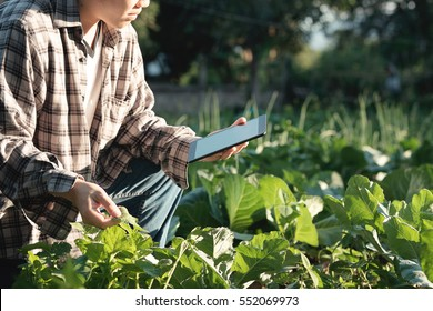 Agronomist Using a Tablet for read a report and sitting in an agriculture Field with copy space and vintage tone with selective focus,agriculture technology concept.